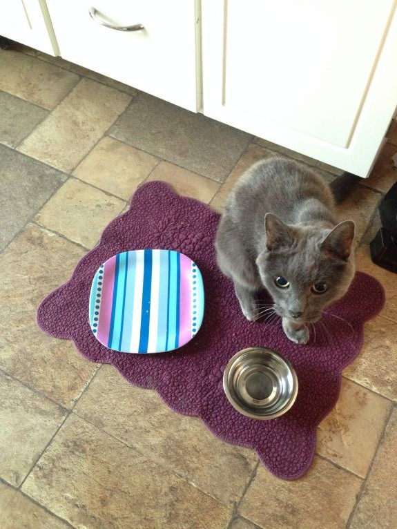 """Pardon me, but this dish is empty. Would you mind terribly refilling it please? It was full five minutes ago but somehow it all seems to have disappeared. Many thanks, carry on!"""