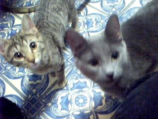 Two Kitties Looking