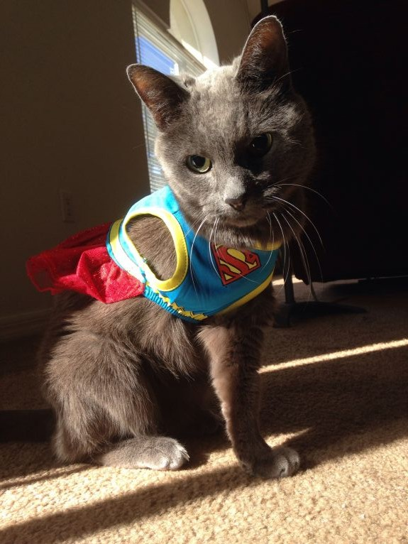 Super Sunshine Kitty