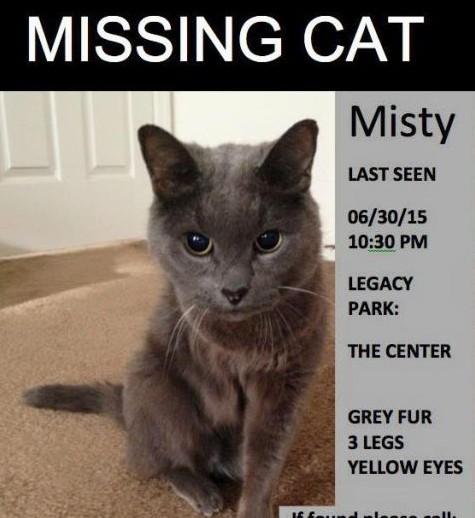 Misty Missing